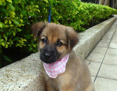 Woodside Dog Rescue