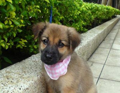 Pound Puppy Rescue: Northern California San Francisco Bay Area Dog